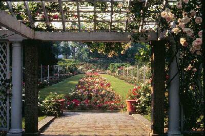 Cranford Rose Garden.