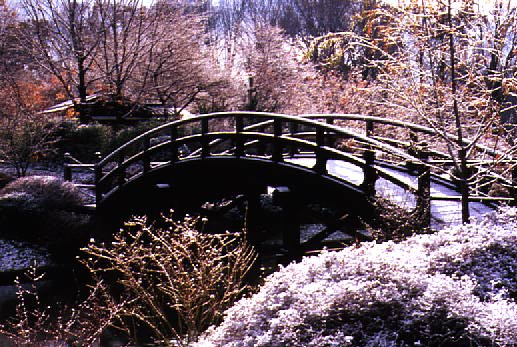 Drum Bridge In Seiwa En Japanese Garden